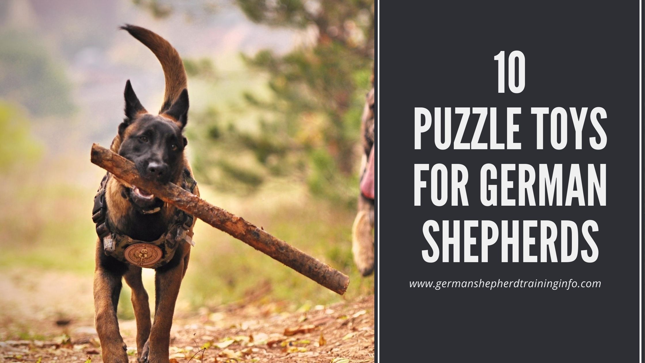 List of top 10 interactive puzzle toys for german shepherds