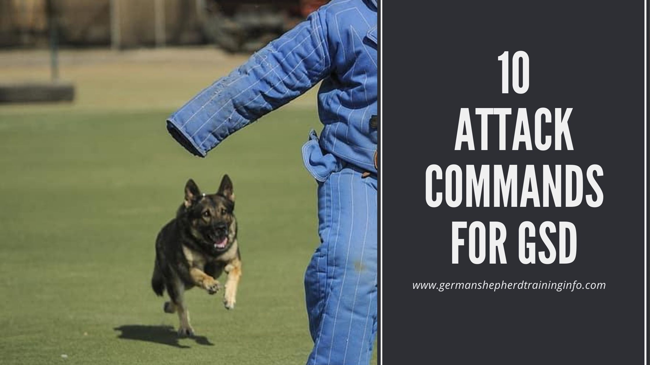 List of 10 attack commands for german shepherd dogs