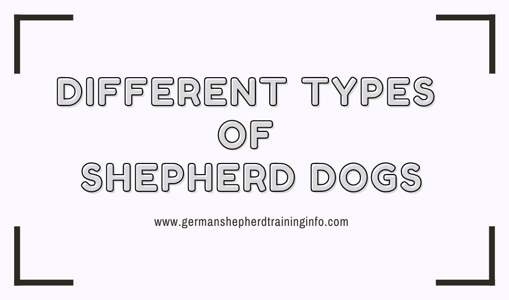 Different Types of Shepherd Dogs You Should be Aware of
