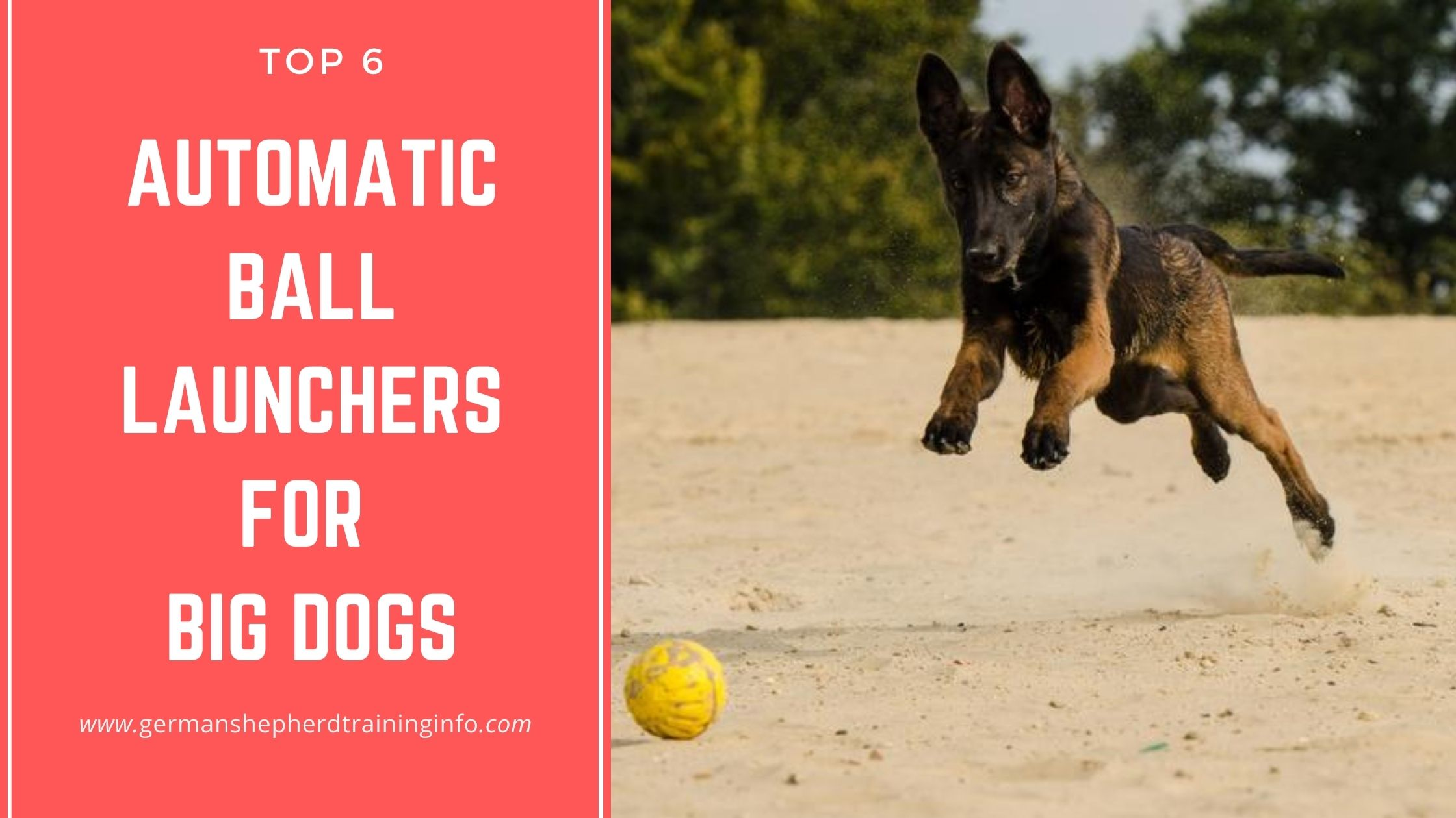 6 Automatic Ball Launcher for Large Breed Dogs like German Shepherd