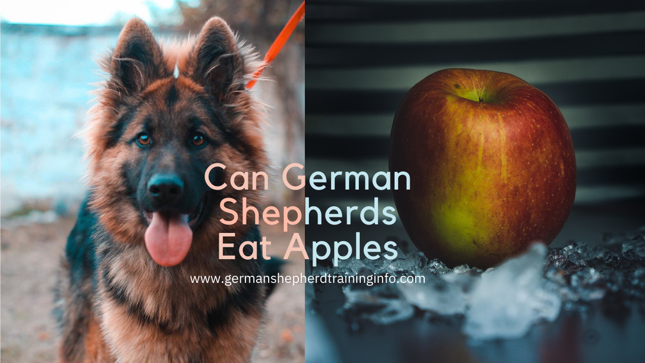 Can German Shepherds Eat Apples