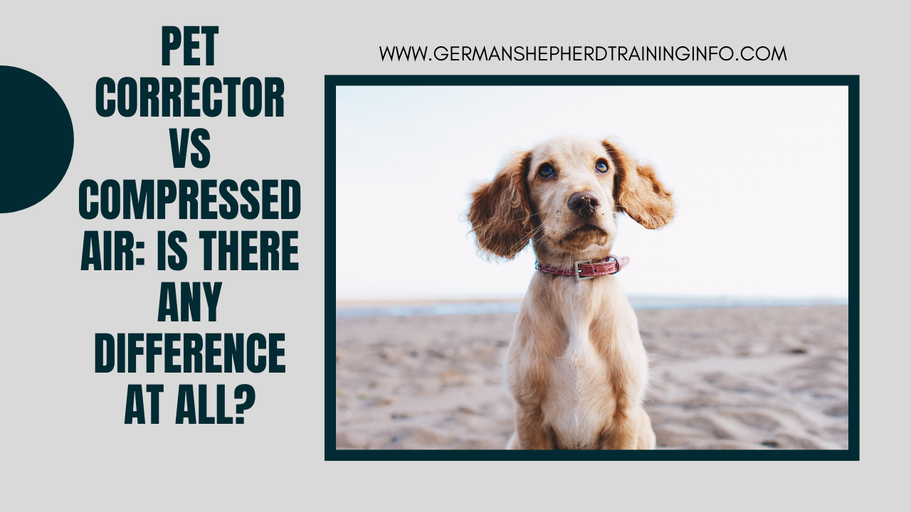 Pet corrector vs compressed air: Is there any difference at all?