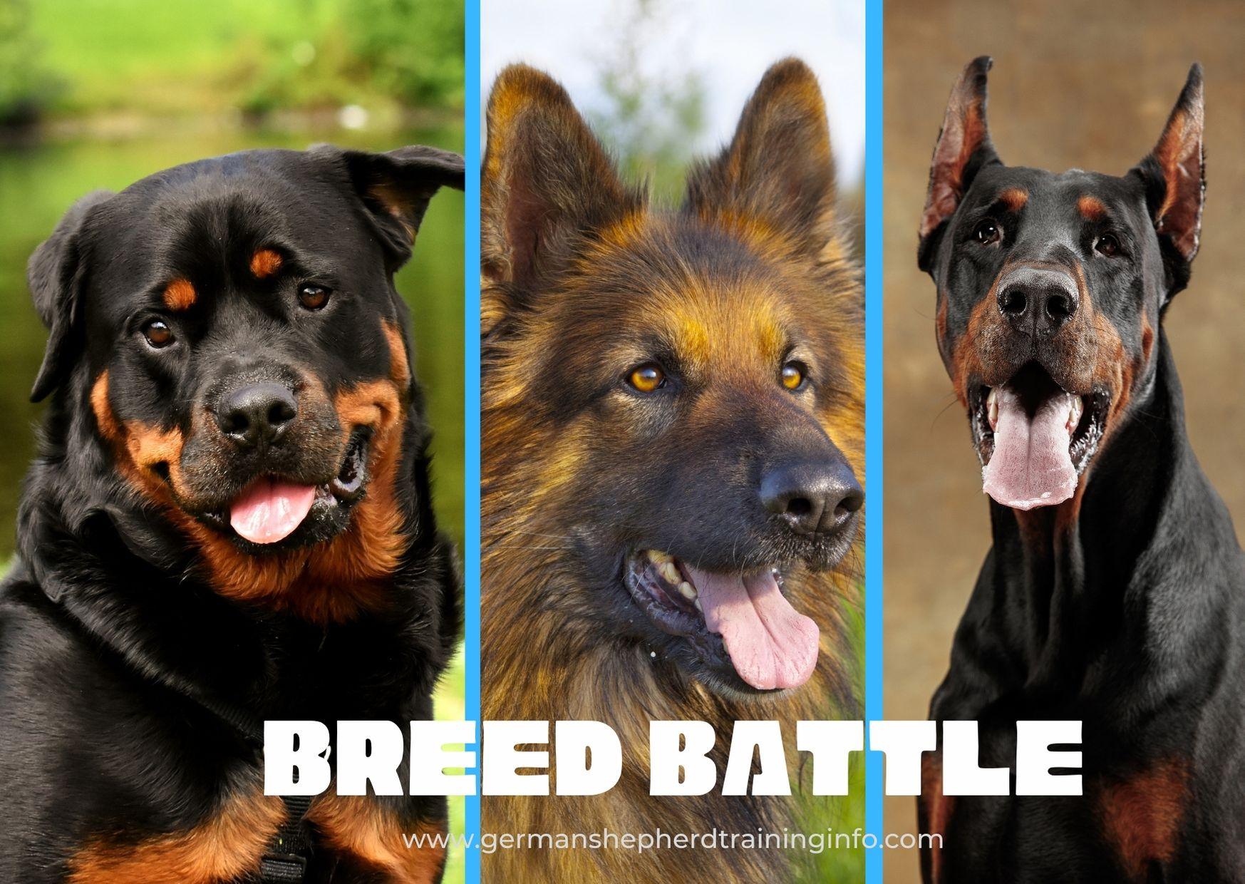 Rottweiler vs German shepherd vs Doberman: Which breed is the best?