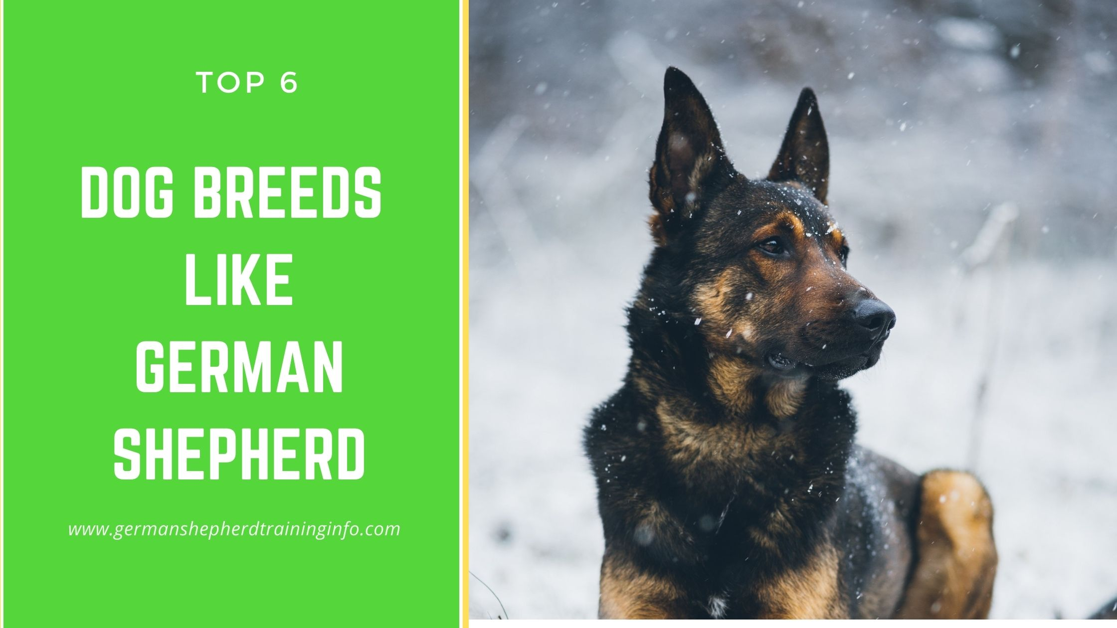 6 Dogs that look similar to German Shepherd
