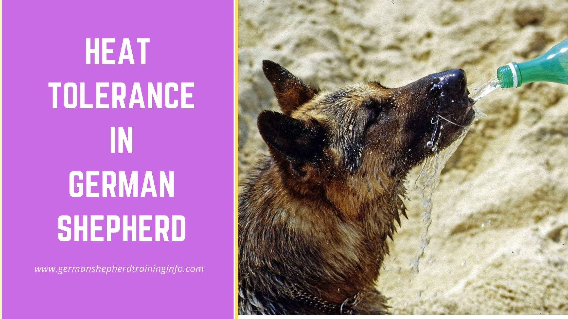 A Quick Guide to Heat Tolerance in German Shepherds
