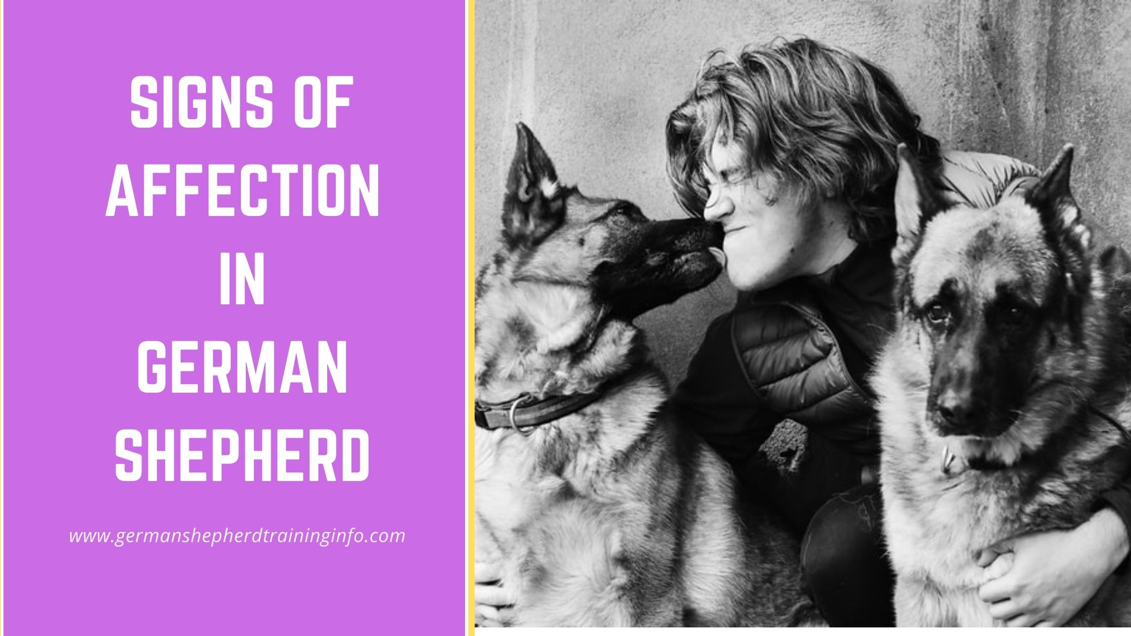 German Shepherd Signs of Affection- How to tell if your GSD loves you?