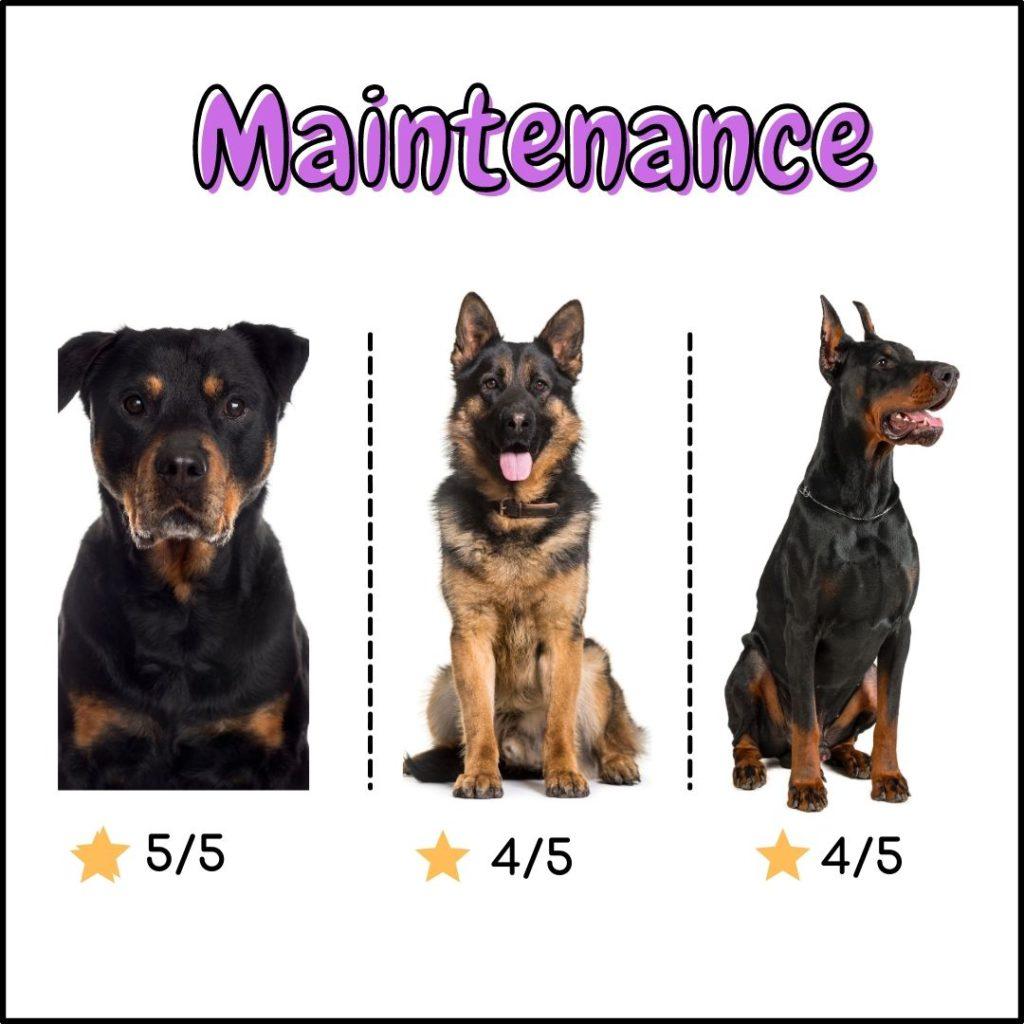 Rottweiler vs German shepherd vs Doberman : maintenance comparison