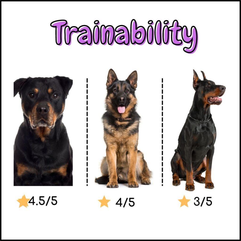 Rottweiler vs German shepherd vs Doberman : Trainability comparison