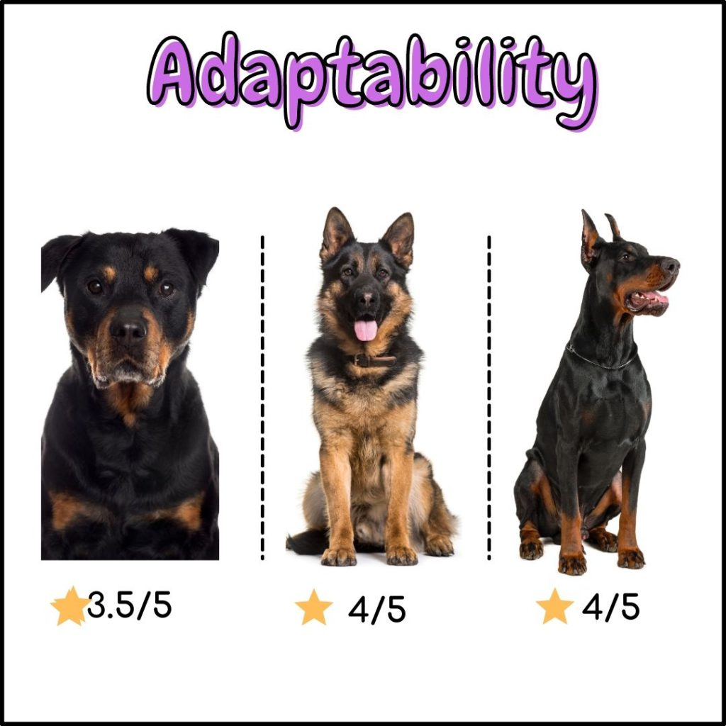 Rottweiler vs German shepherd vs Doberman : Adaptability comparison