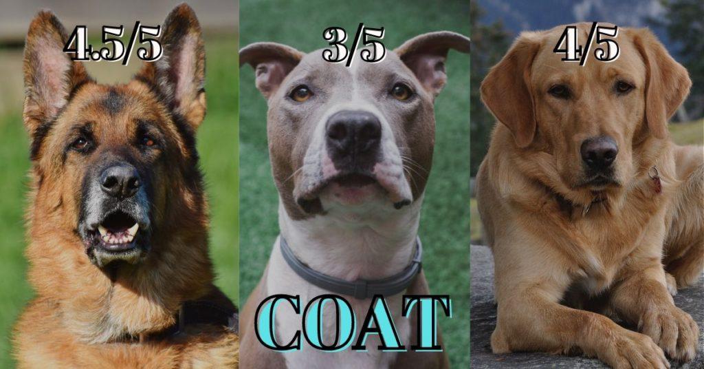 German shepherd vs Pitbull vs Labrador - coat