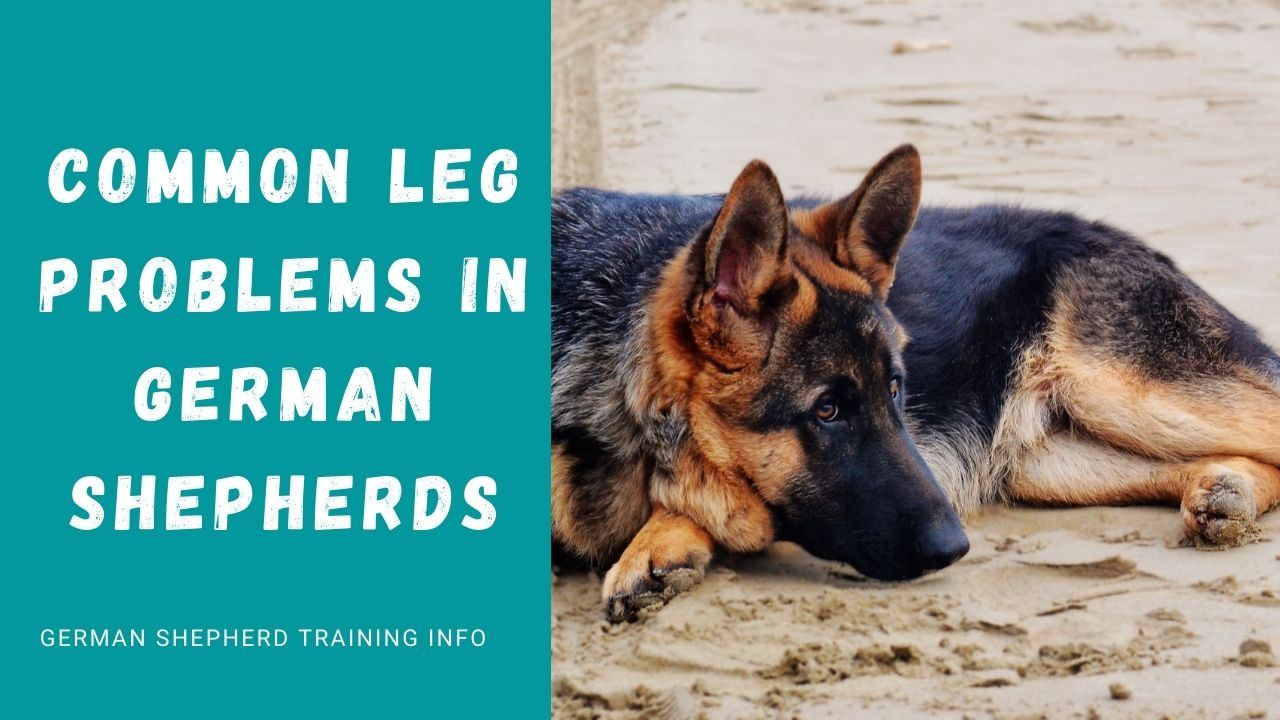 5 Common Leg Problems in German Shepherds Every Dog Parent Must Be Aware Of