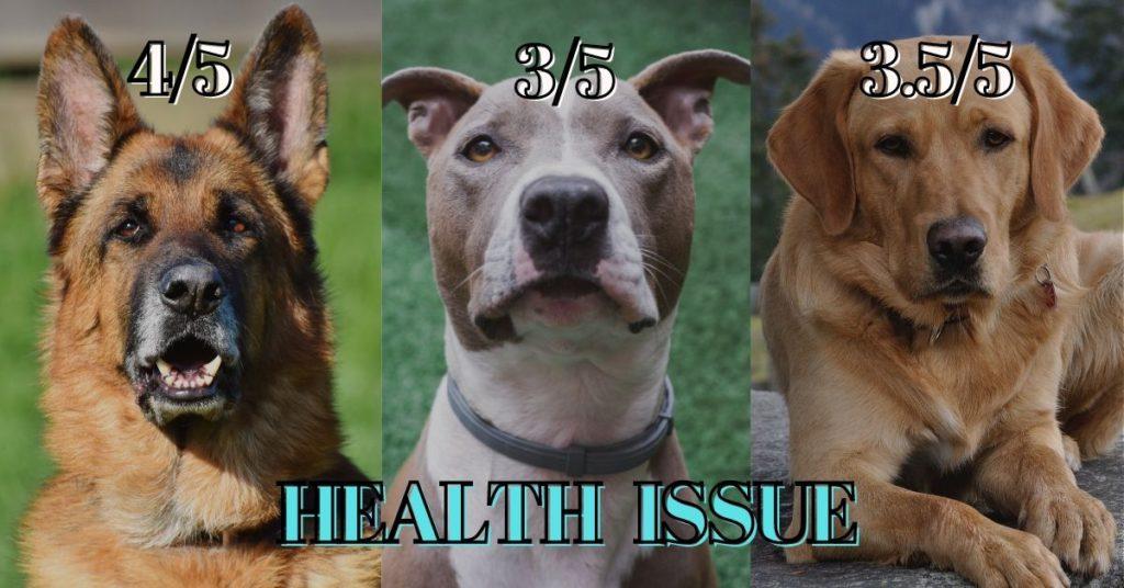 German shepherd vs Pitbull vs Labrador- Health Issue