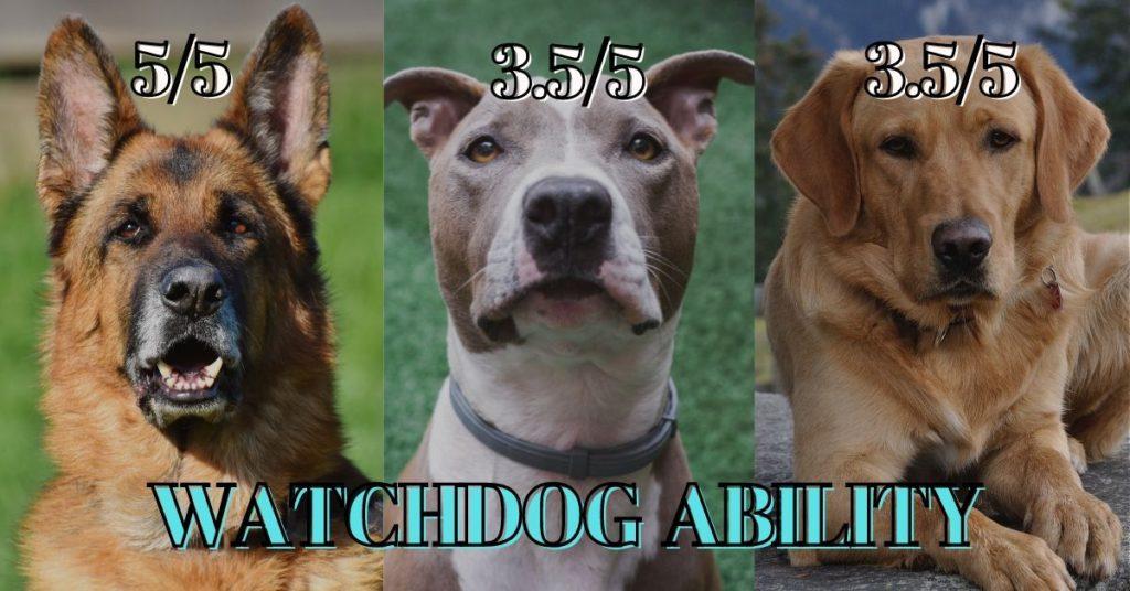 German shepherd vs Pitbull vs Labrador - Watchdog Ability