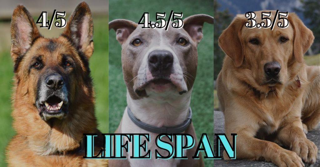 German shepherd vs Pitbull vs Labrador - Life span