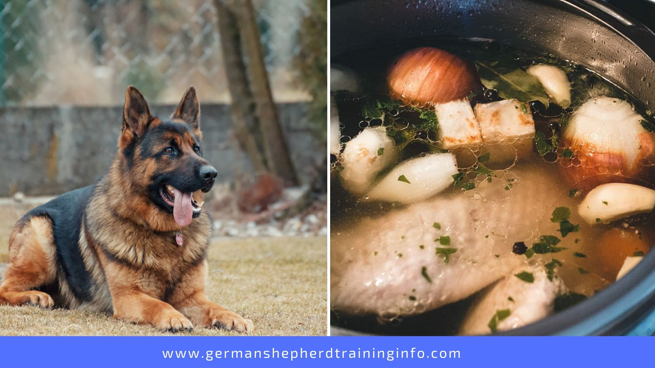 Can Dogs Eat Chicken Broth With Onions?