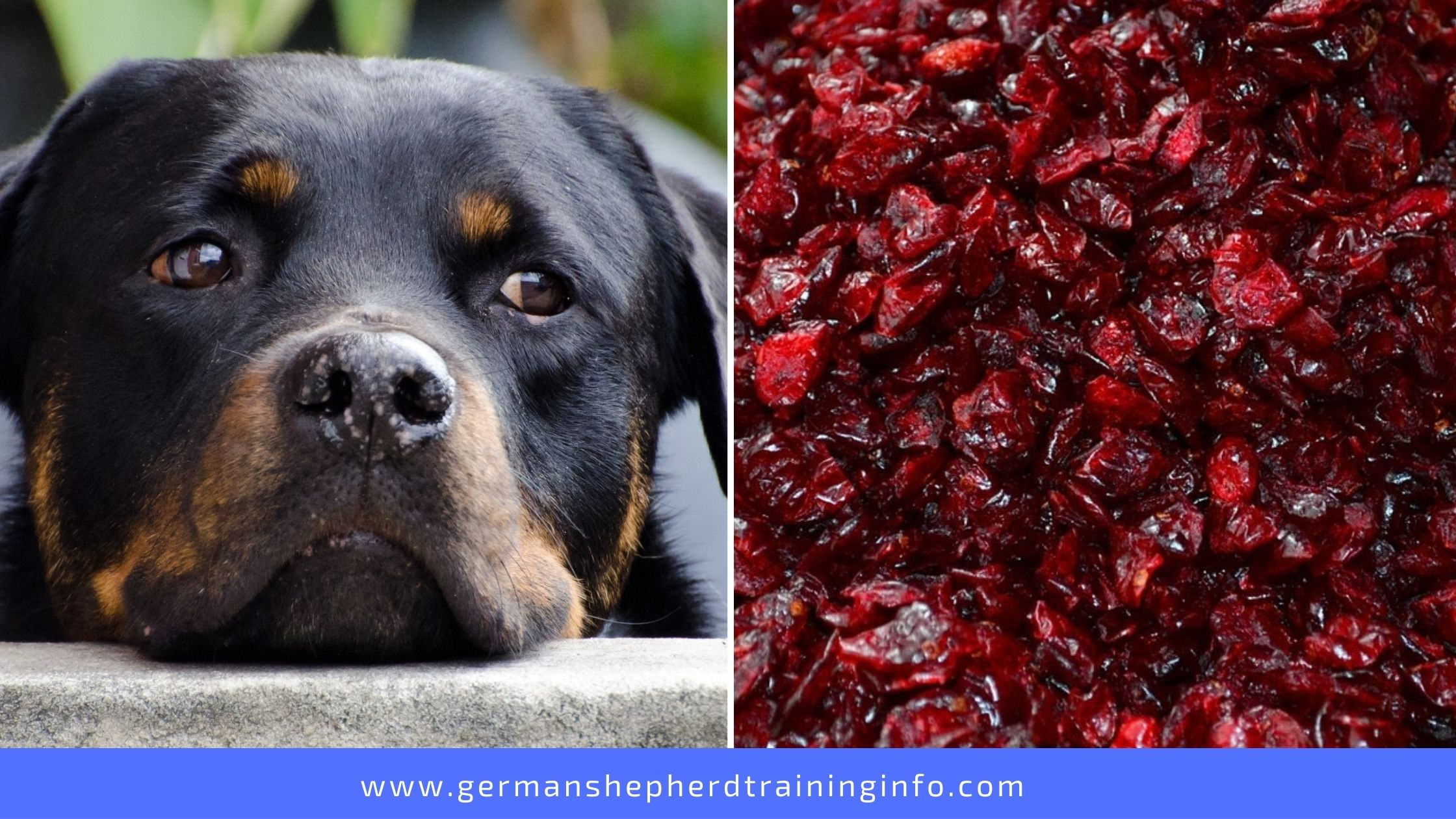 Can Dogs Eat Dried Cranberries?
