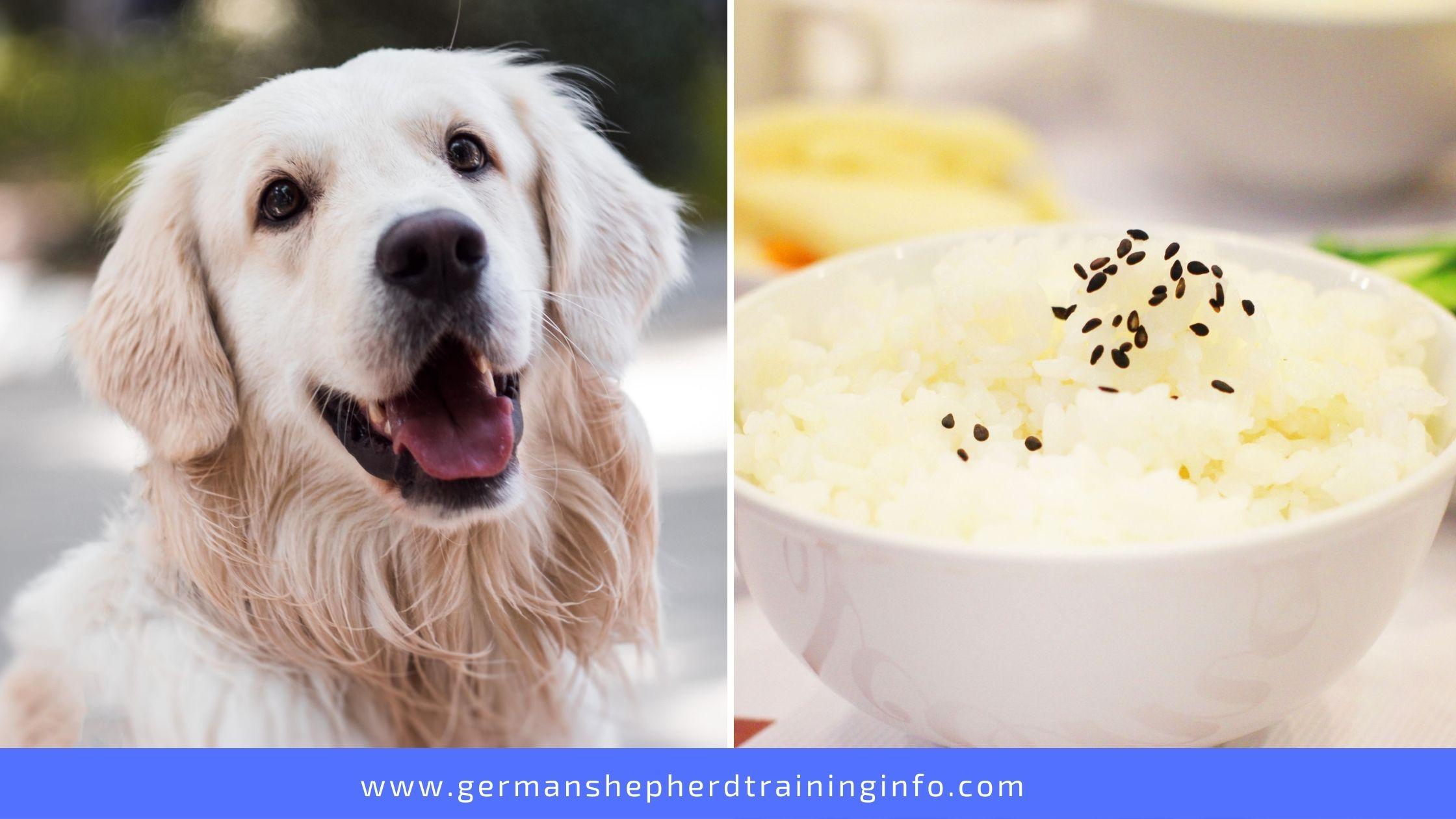 Can Dogs Eat Jasmine Rice?