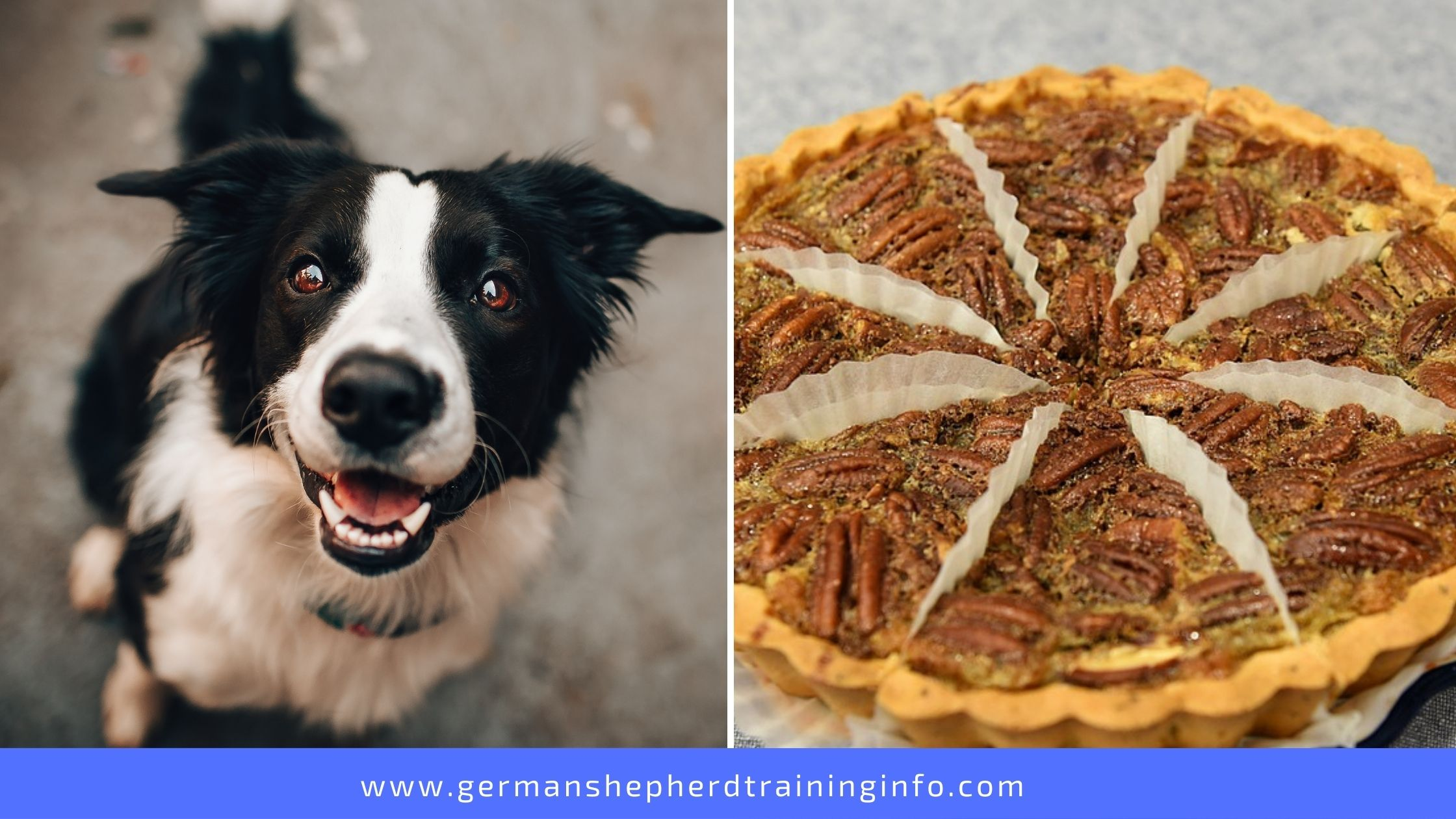 Can Dogs Eat Pecan Pie?