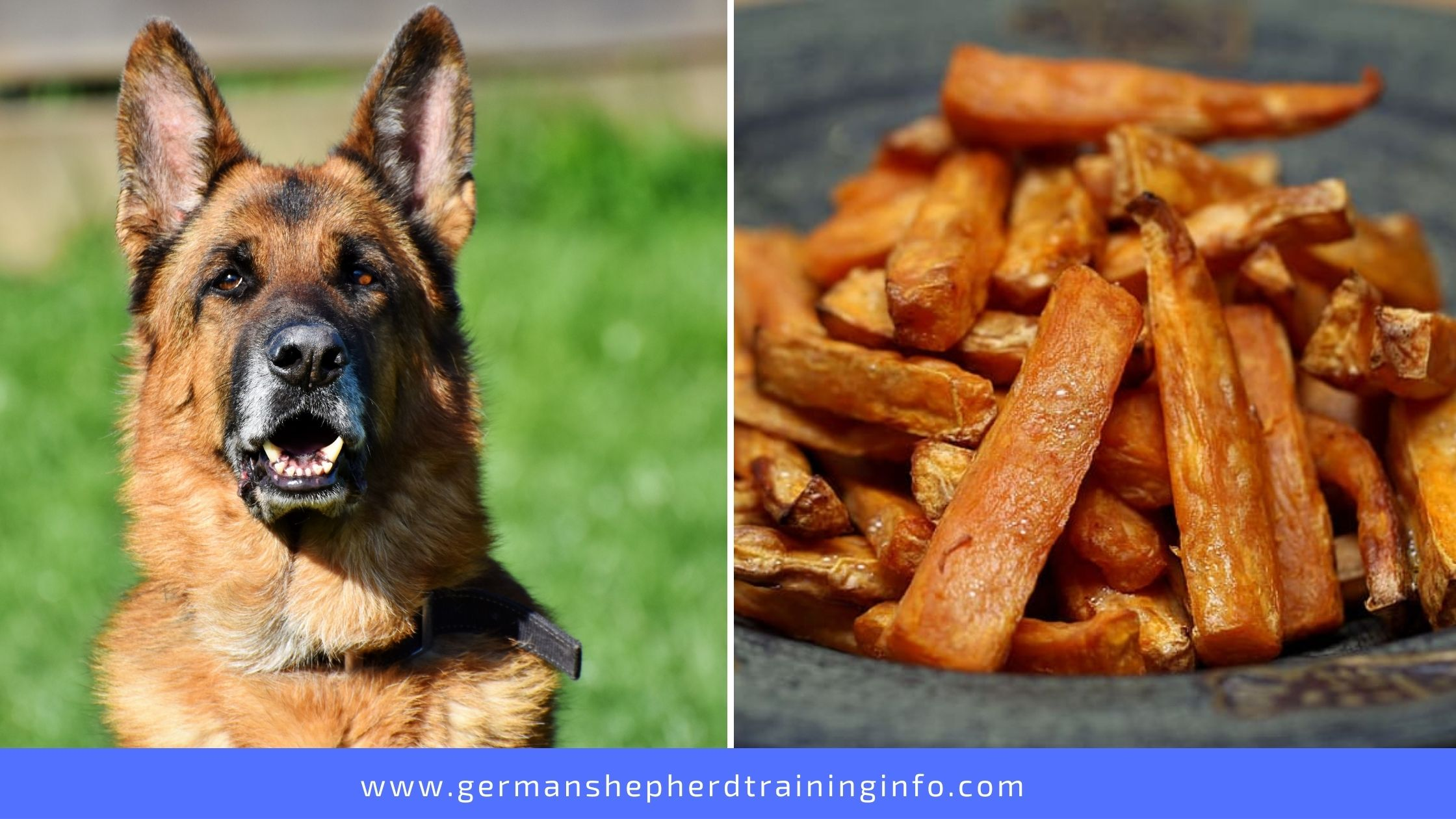Can Dogs Eat Sweet Potato Fries