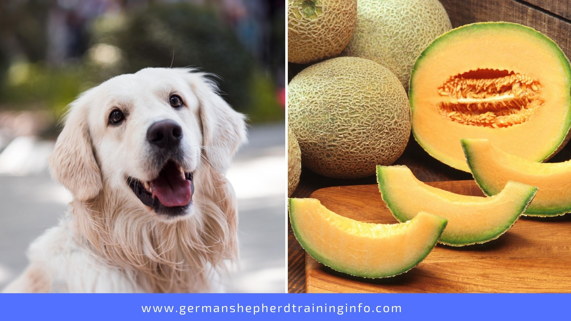 Can Dogs Eat Cantaloupe Rind?