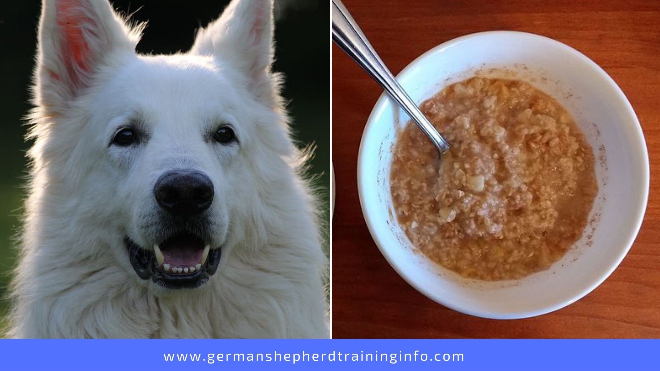 Can Dogs Eat Oatmeal With Brown Sugar And Cinnamon?