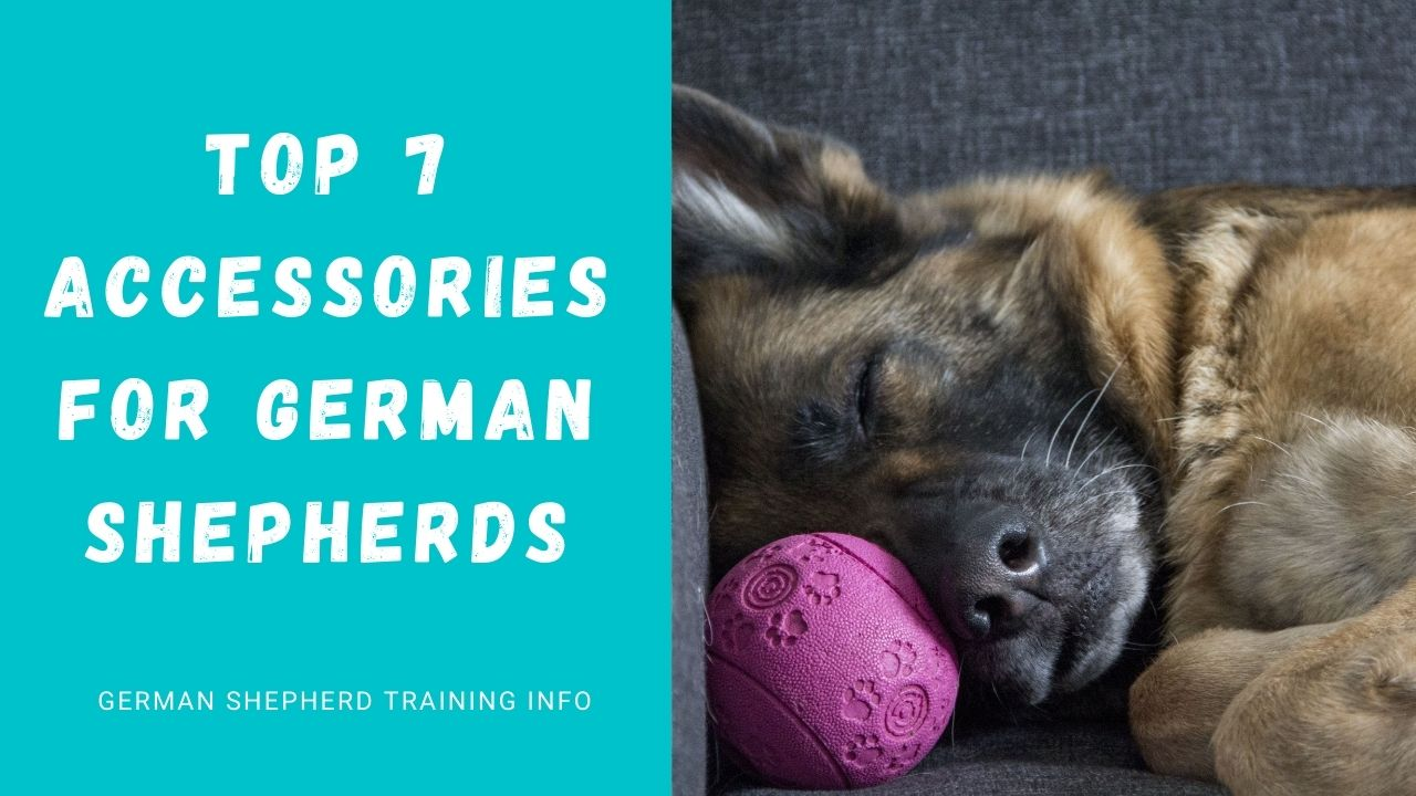 7 Must-Have Accessories For Your German Shepherd Dog