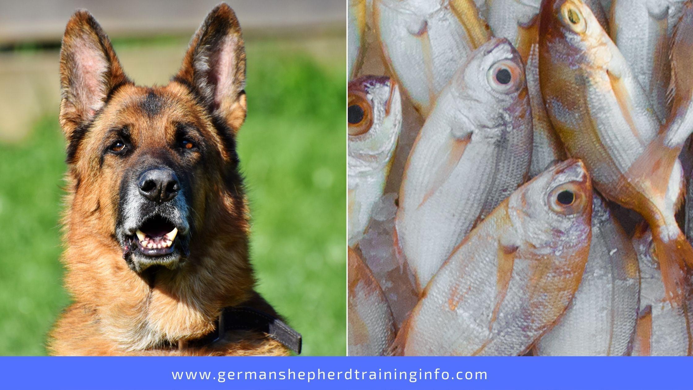 Can German Shepherd Eat Fish?