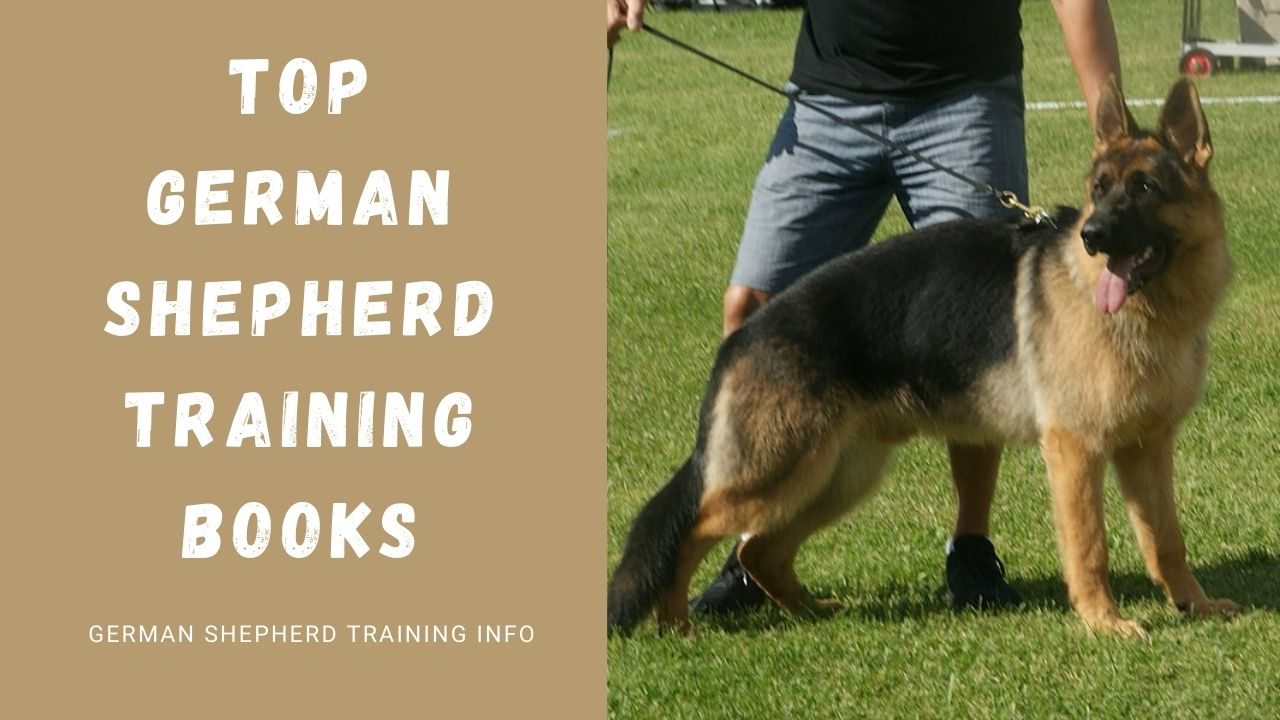 Top 6 German Shepherd Training Books You Must Know About