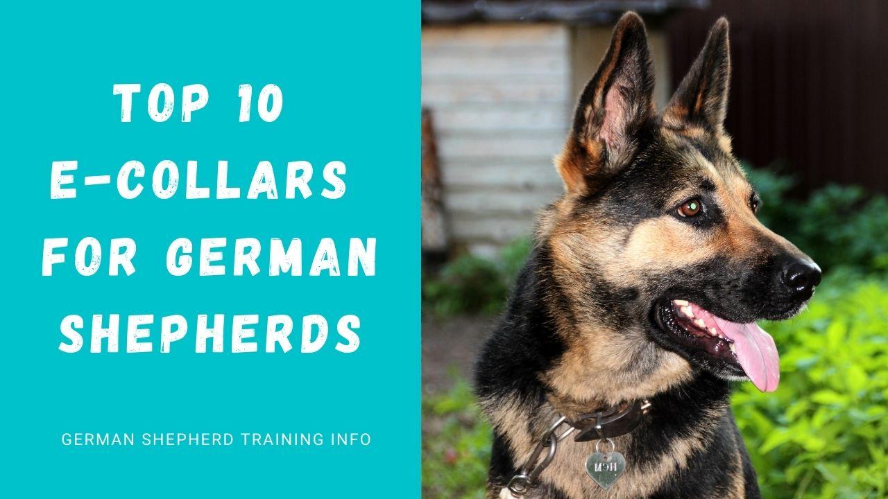 top 10 E-collars for German shepherds