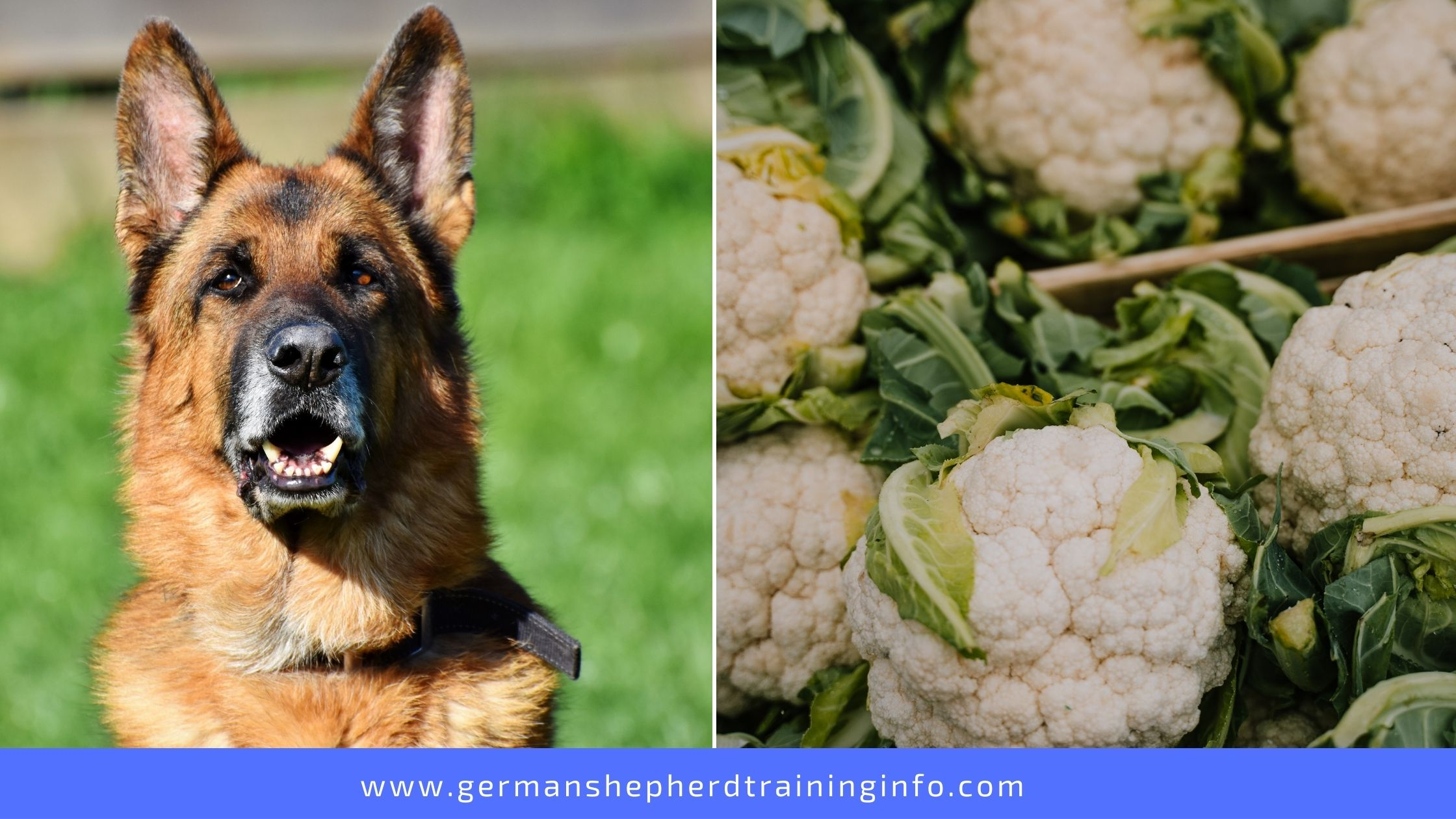 can dogs eat cauliflower leaves