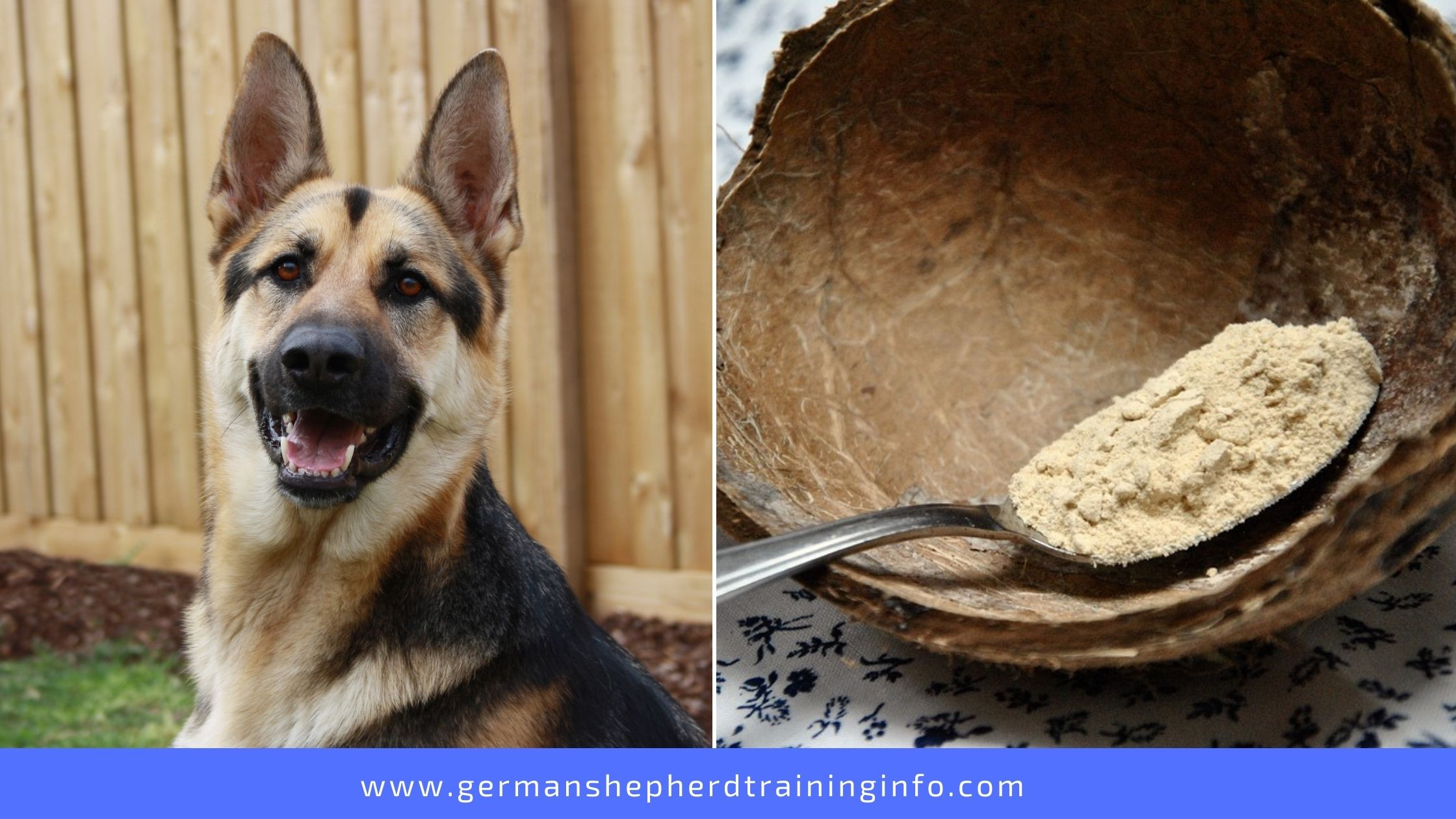 Can Dogs Eat Coconut Flour?