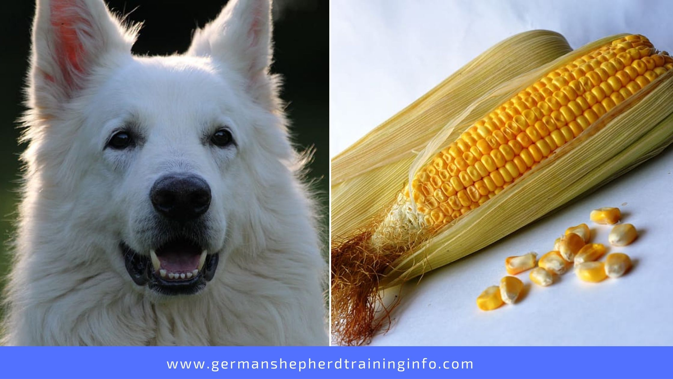 Can Dogs Eat Corn Husks?