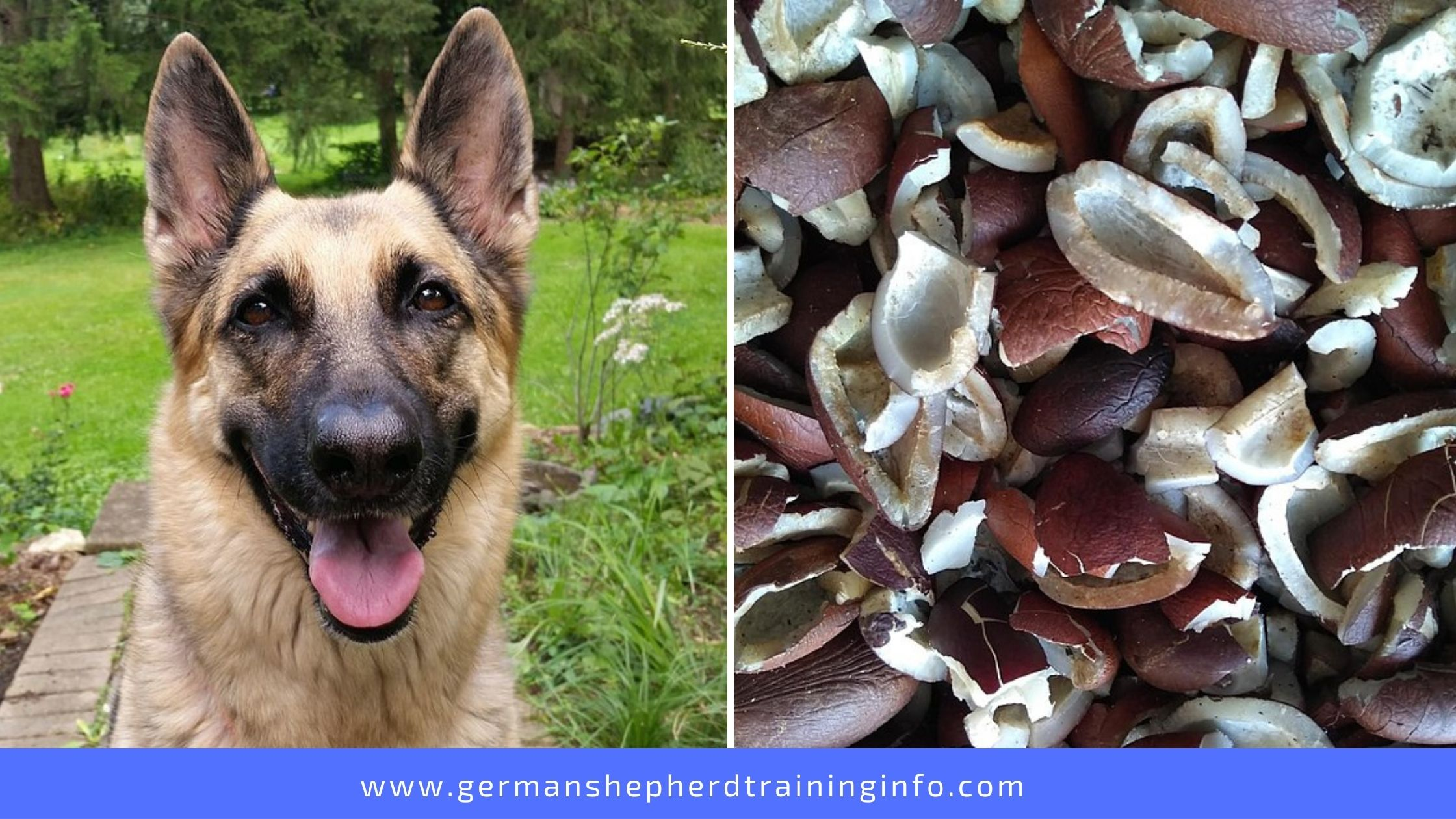 Can Dogs Eat Dried Coconut?