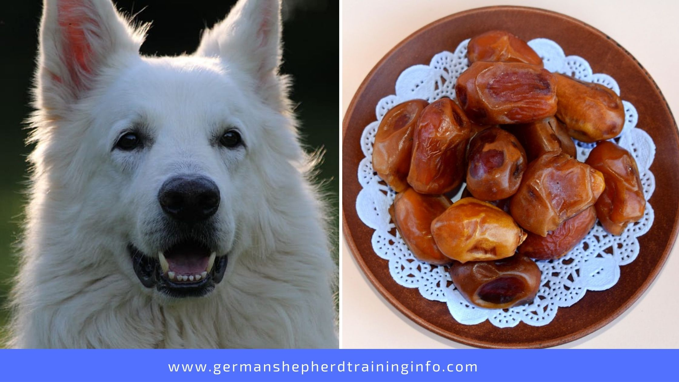 Can Dogs Eat Dried Dates? Are these Sweet Treats Okay for Furry Member?