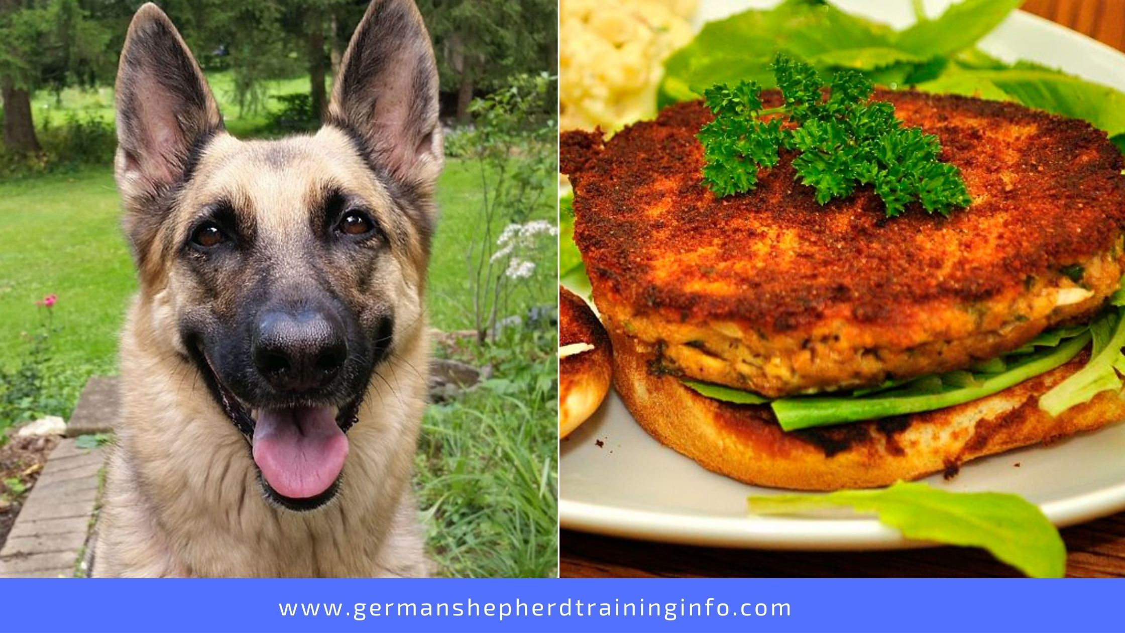 Can Dogs Eat Salmon Patties?