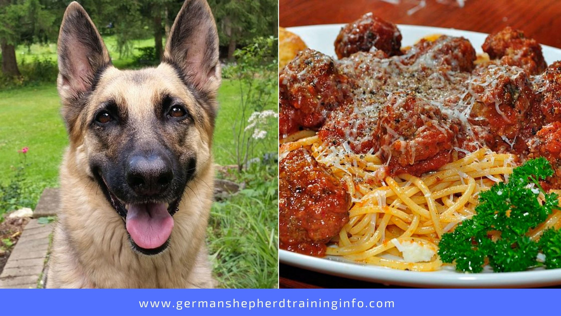 Can Dogs Eat Spaghetti And Meatballs?