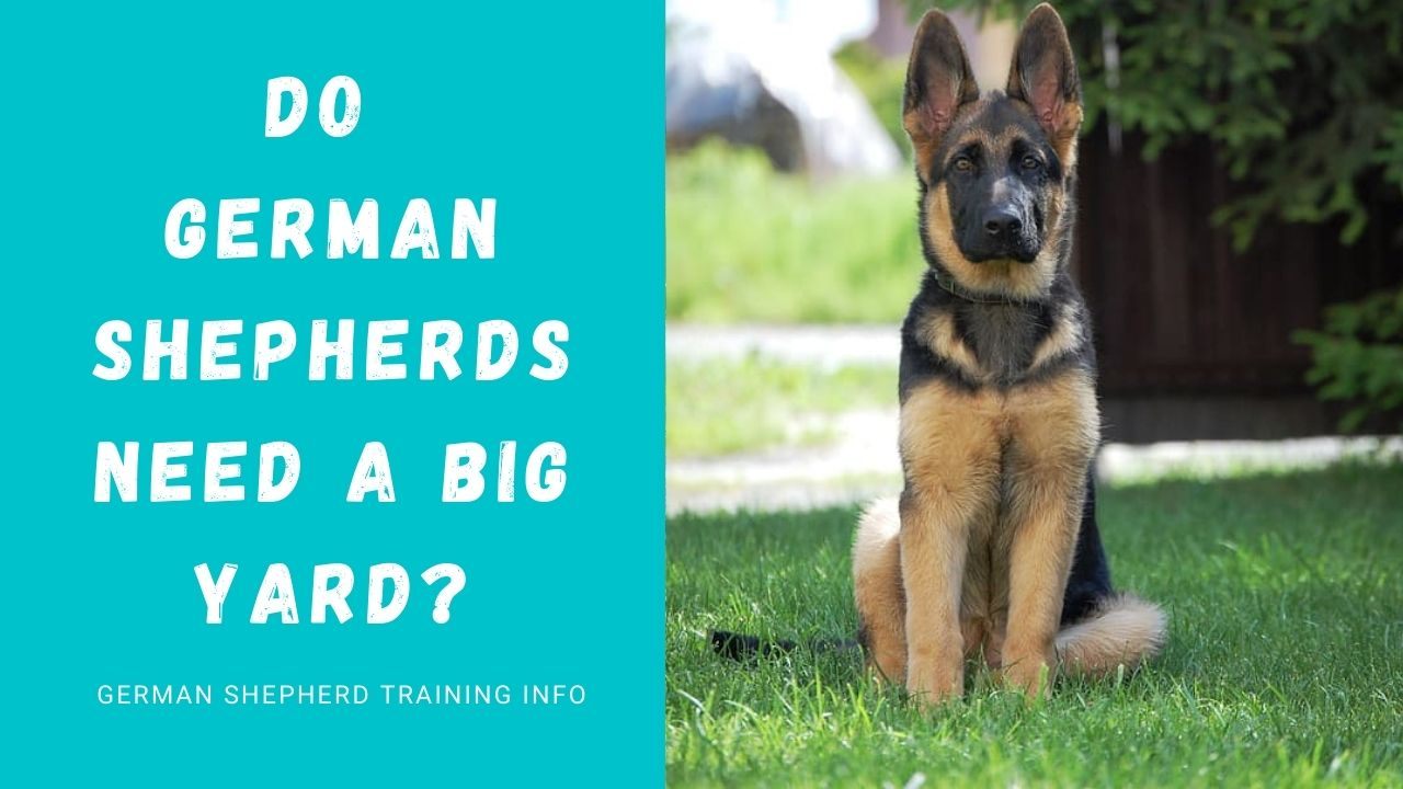 Do German Shepherds Need A Big Yard?