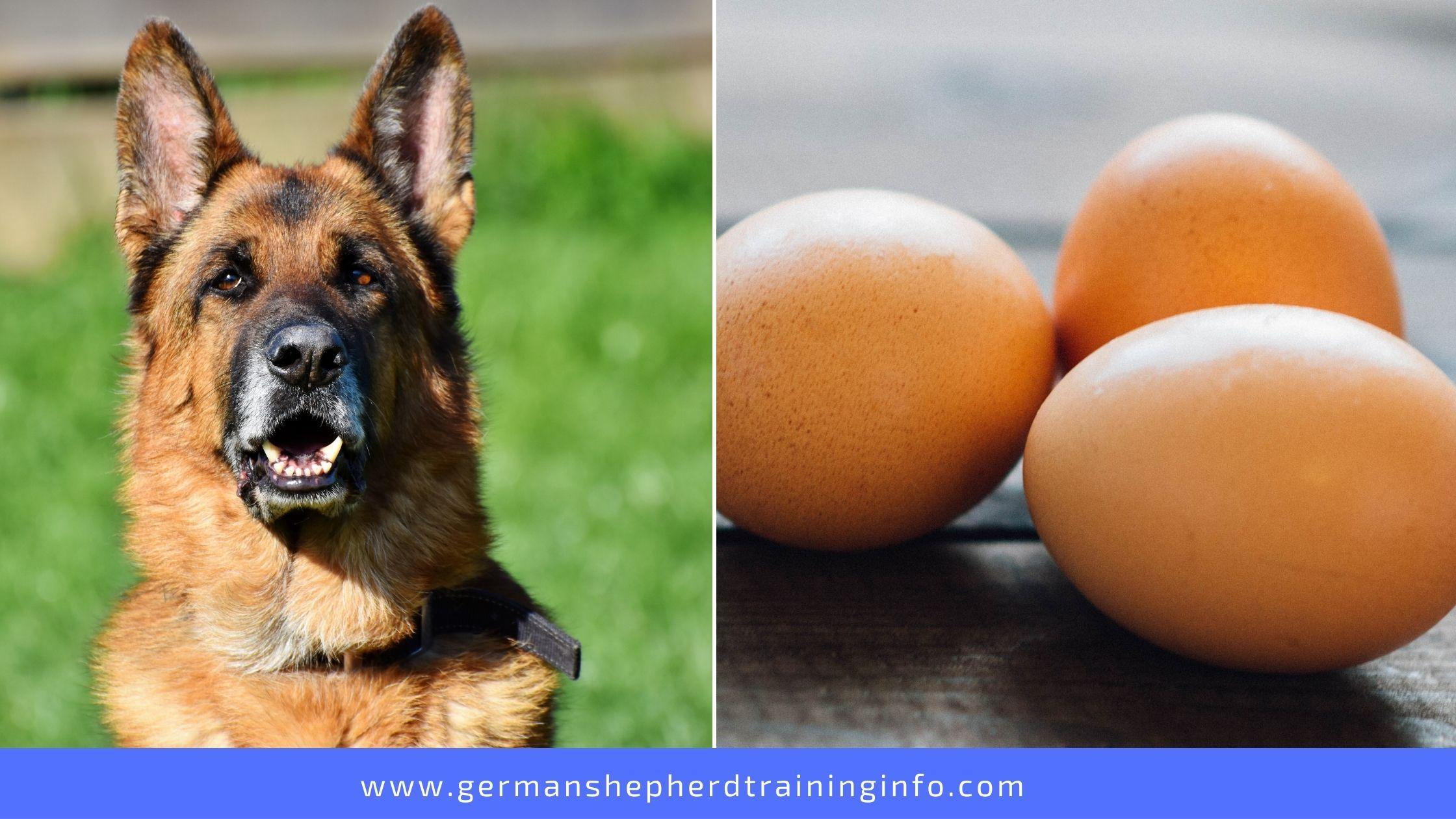 Can German Shepherds Eat Eggs?