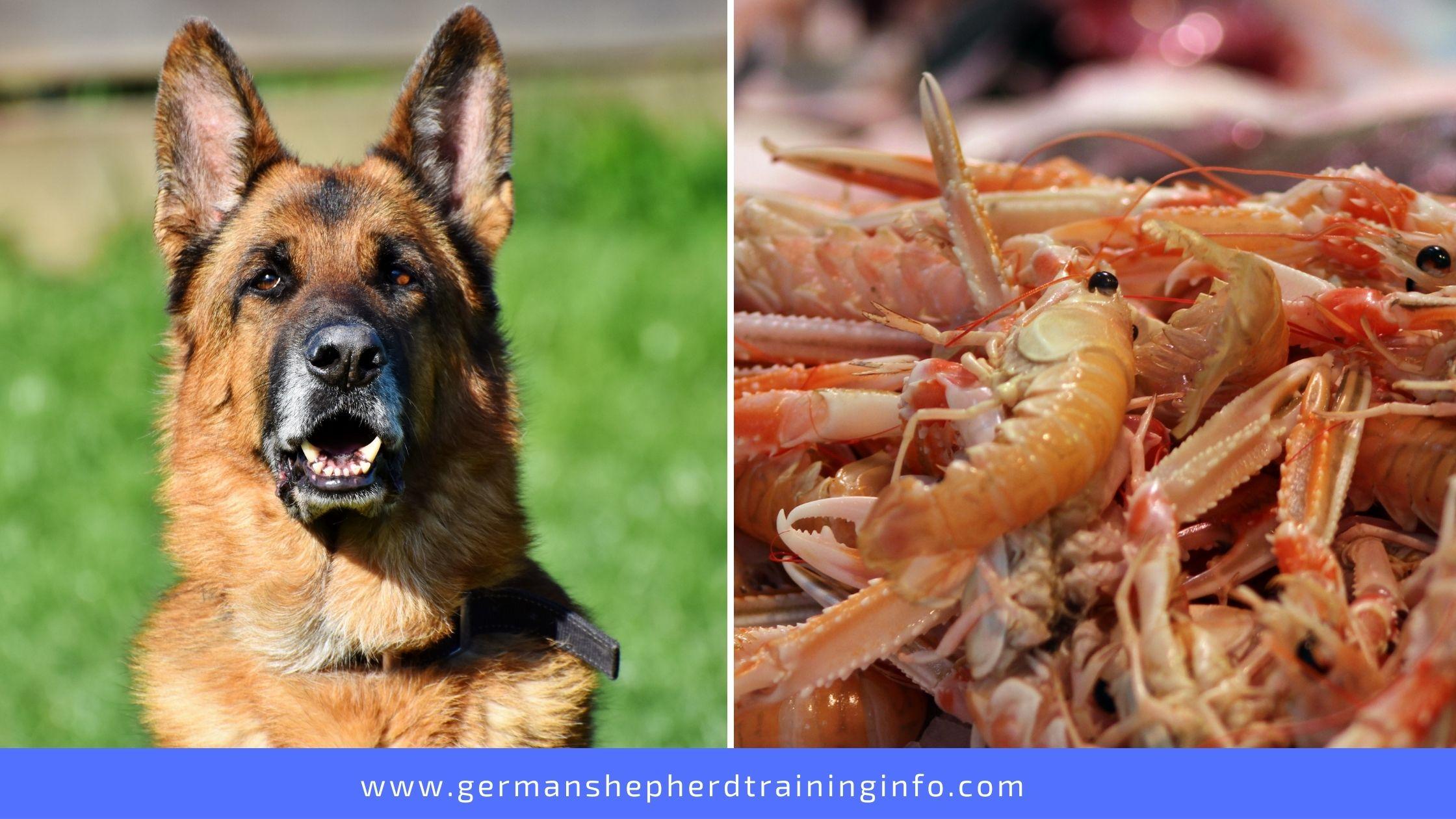 Can German Shepherds Eat Shrimp?