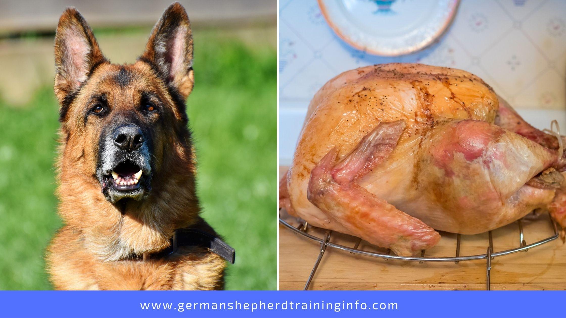 Can German Shepherds eat Turkey?