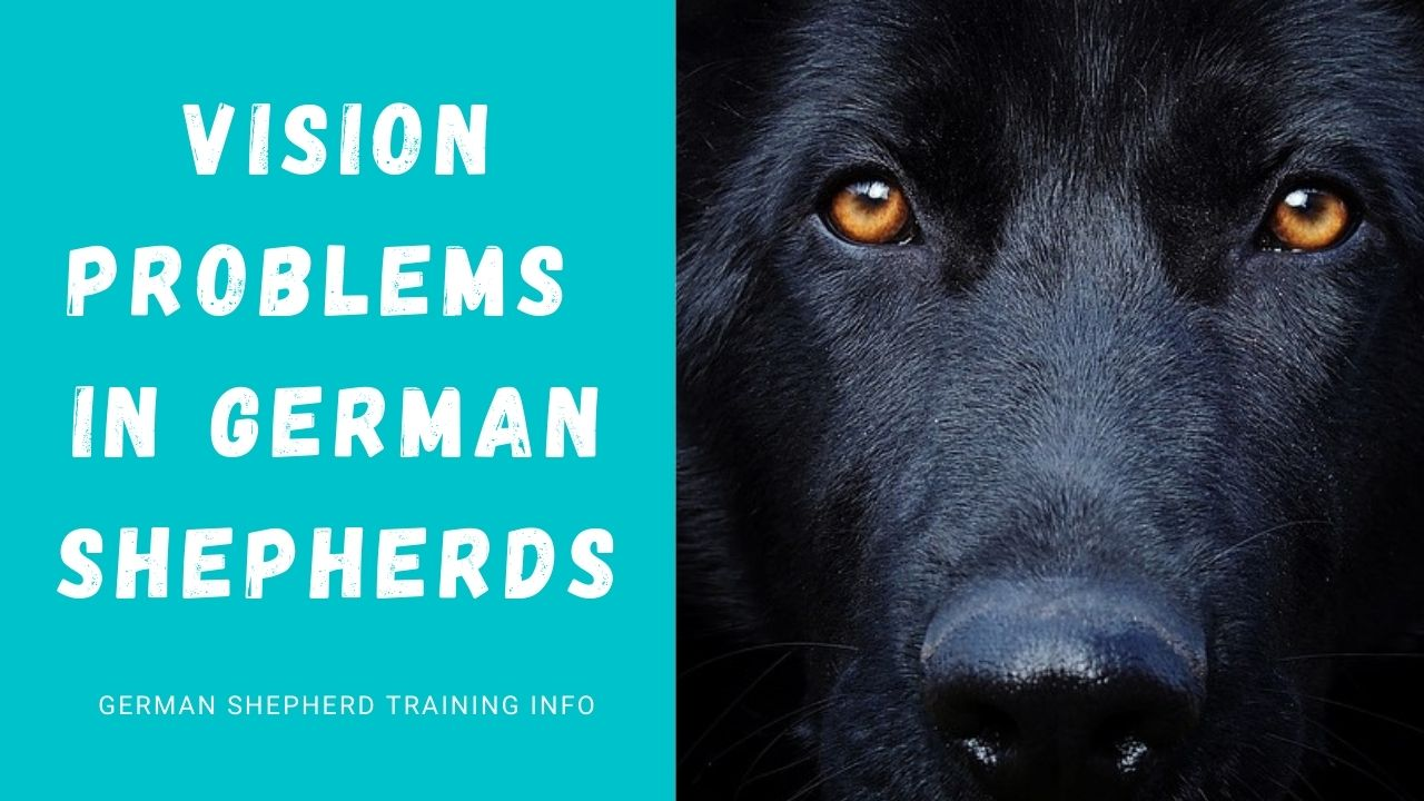 Common Vision Problems In German shepherds