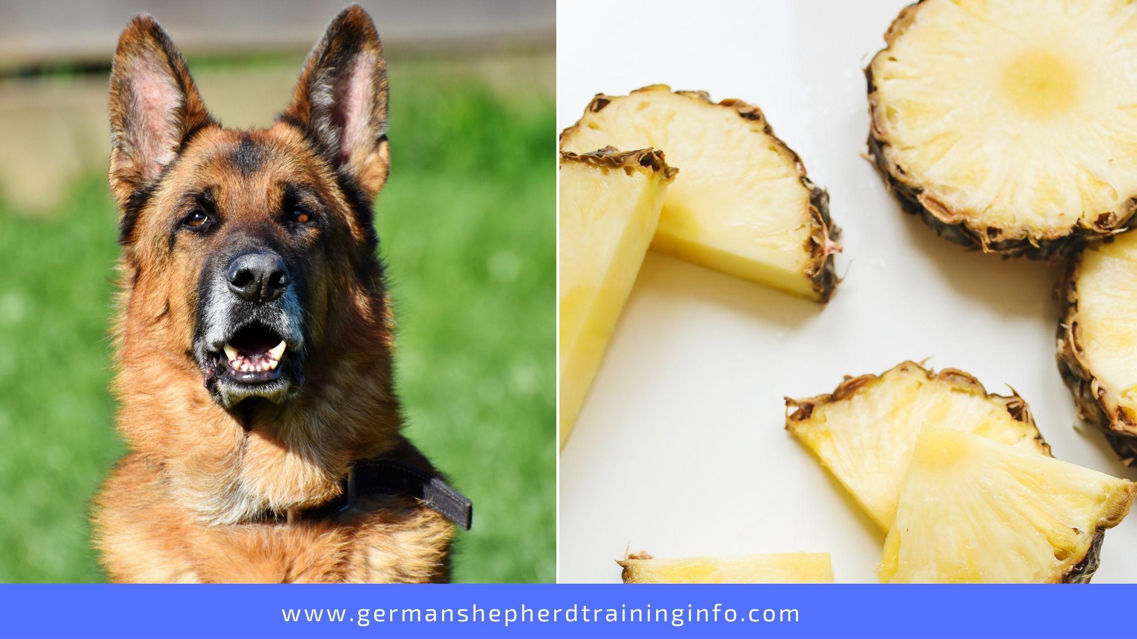 Can German Shepherds Eat Pineapple?
