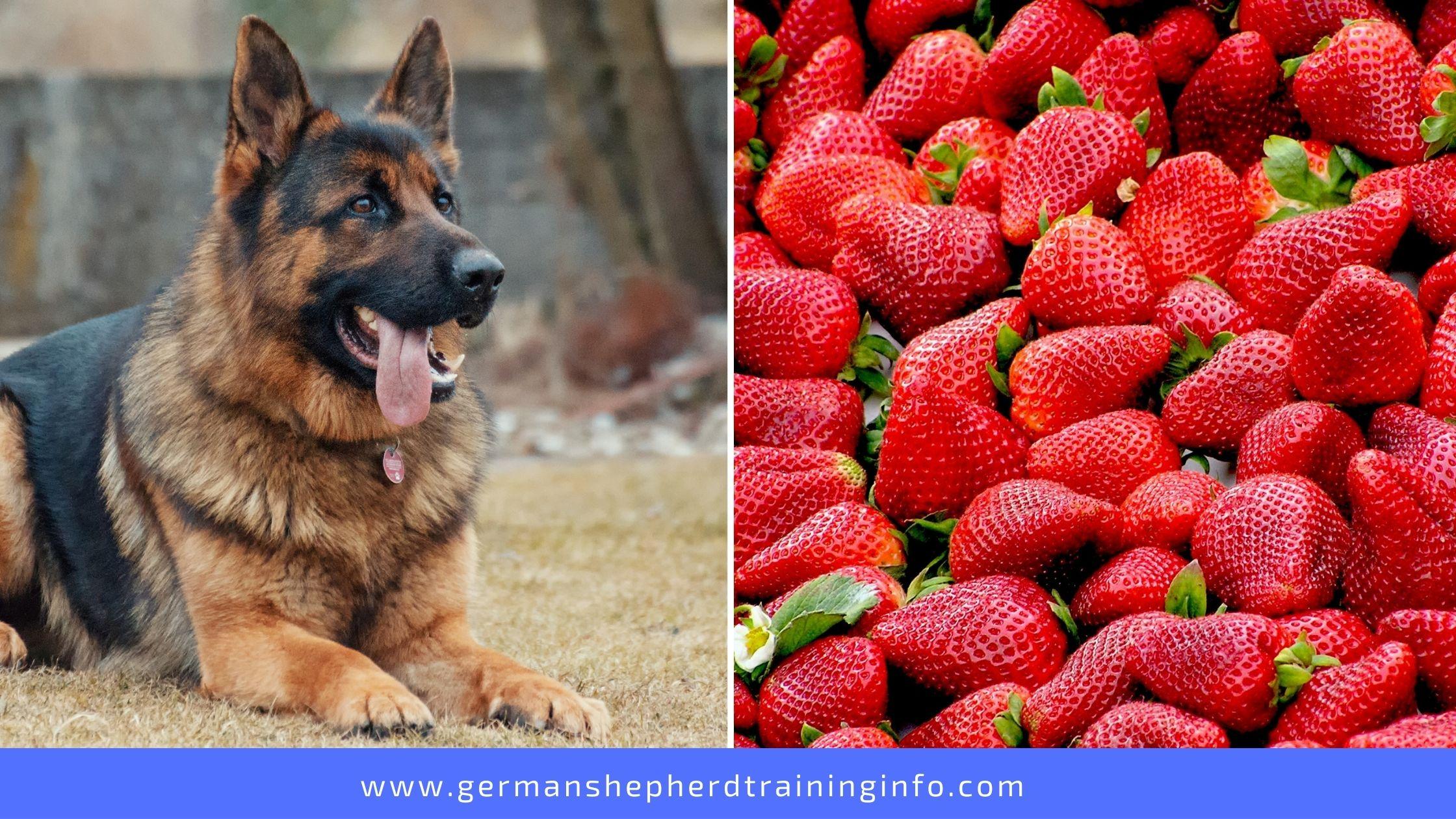 Can German Shepherds Eat Strawberries?