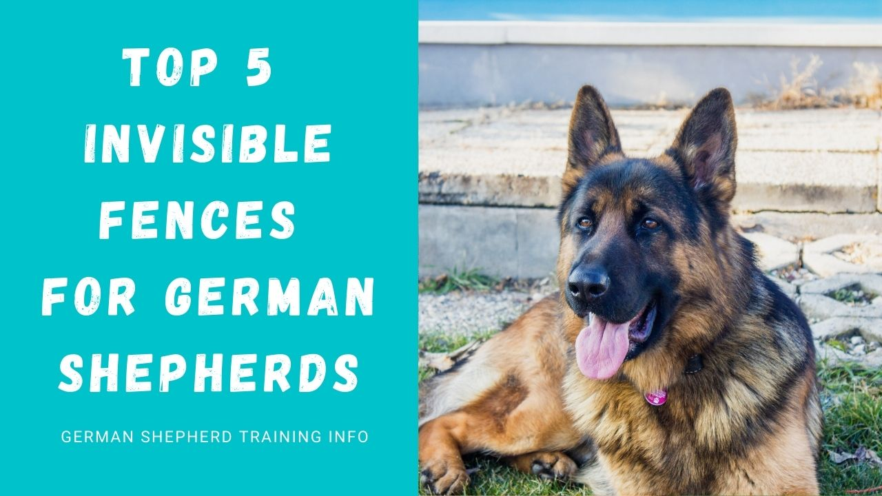 5 Best Invisible Fences For German Shepherds: